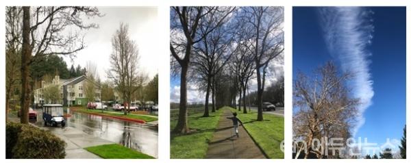 미국 오리건주 북서부 도시 , 포틀랜드. 겨울이 우기라서 추운 날씨에도 푸른 잔디를 볼 수 있다. 나무냄새가 나는  공기를 마실 수 있는 자연친화적인 도시이다.(사진=이다정 교사)